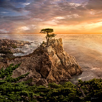 The Lone Cypress, 17 Mile Drive, Monterey Bay